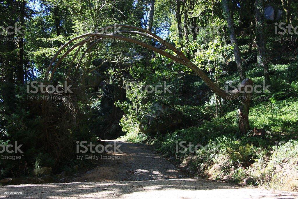bemt tree stock photo