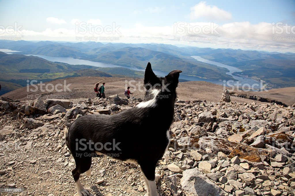 Ben Nevis -dog on descent route no.2 stock photo