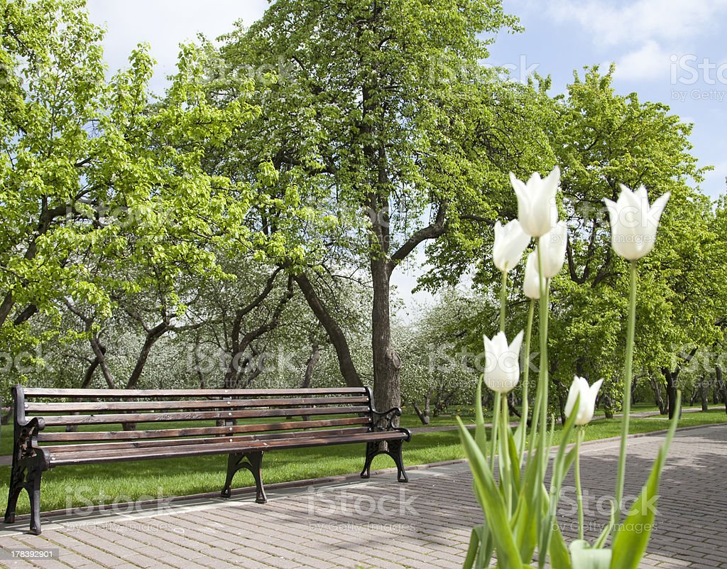 Bench and  tulips royalty-free stock photo