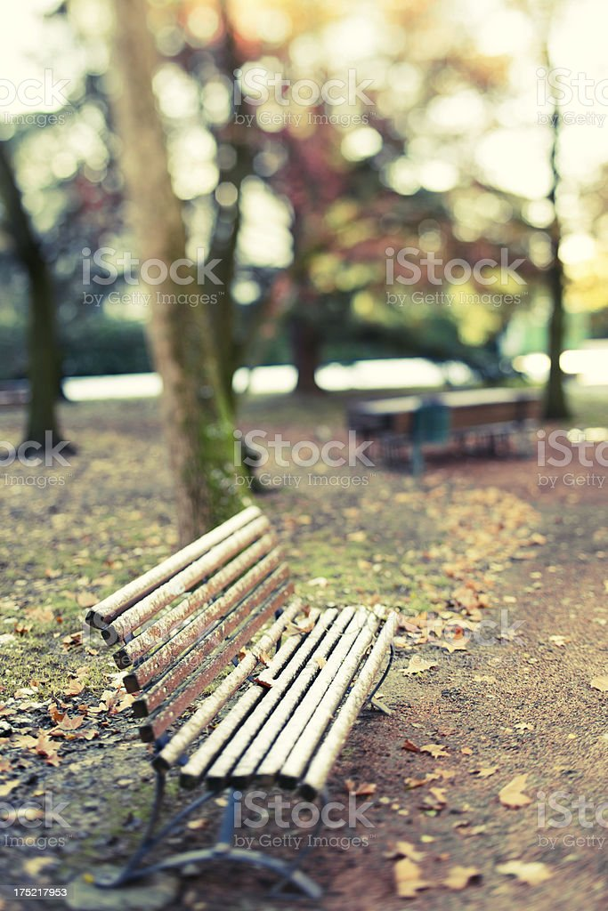 Bench at the park royalty-free stock photo