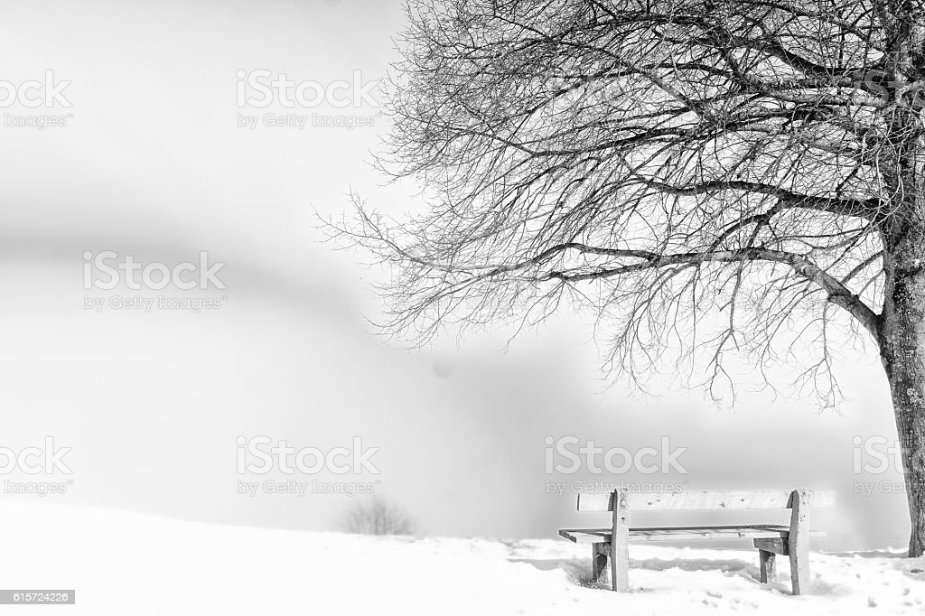 bench, foggy winter day stock photo