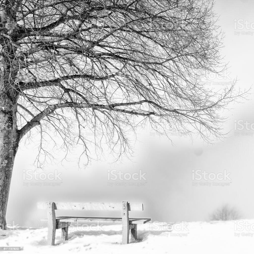 bench, foggy winter day stock photo