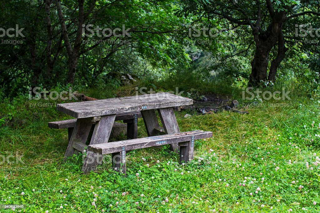 Bench in a forest stock photo