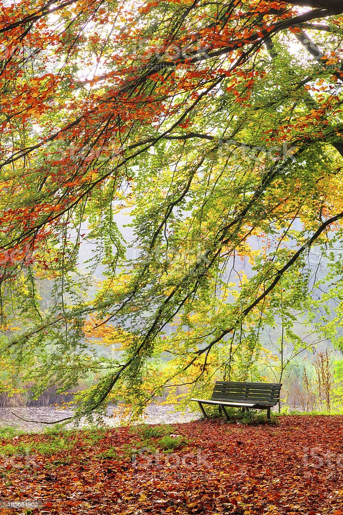 Bench in autumn royalty-free stock photo