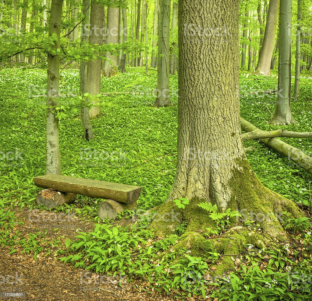 Bench in Forest royalty-free stock photo