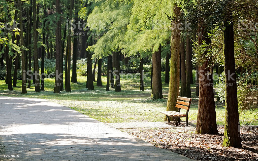 Bench in forest, summer or autumn landscape. stock photo