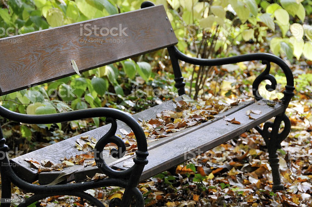 Bench in leaves stock photo