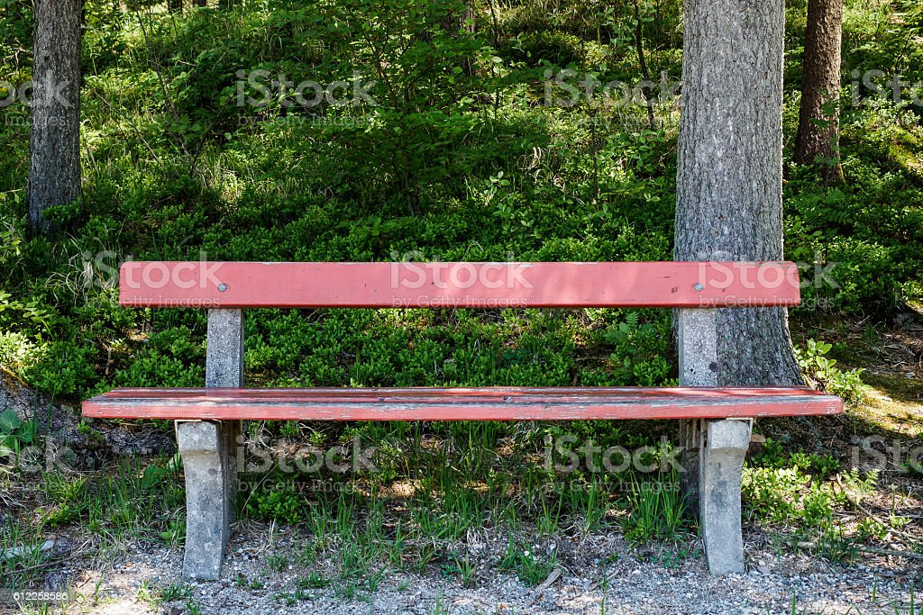 Bench in the forest stock photo