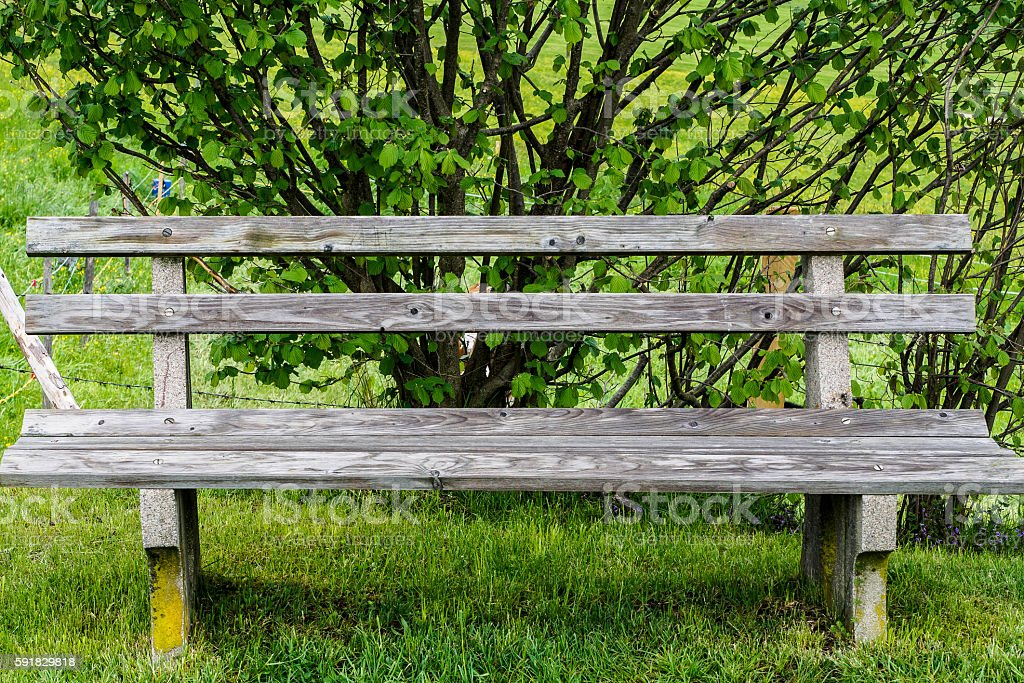 Bench in the grass stock photo