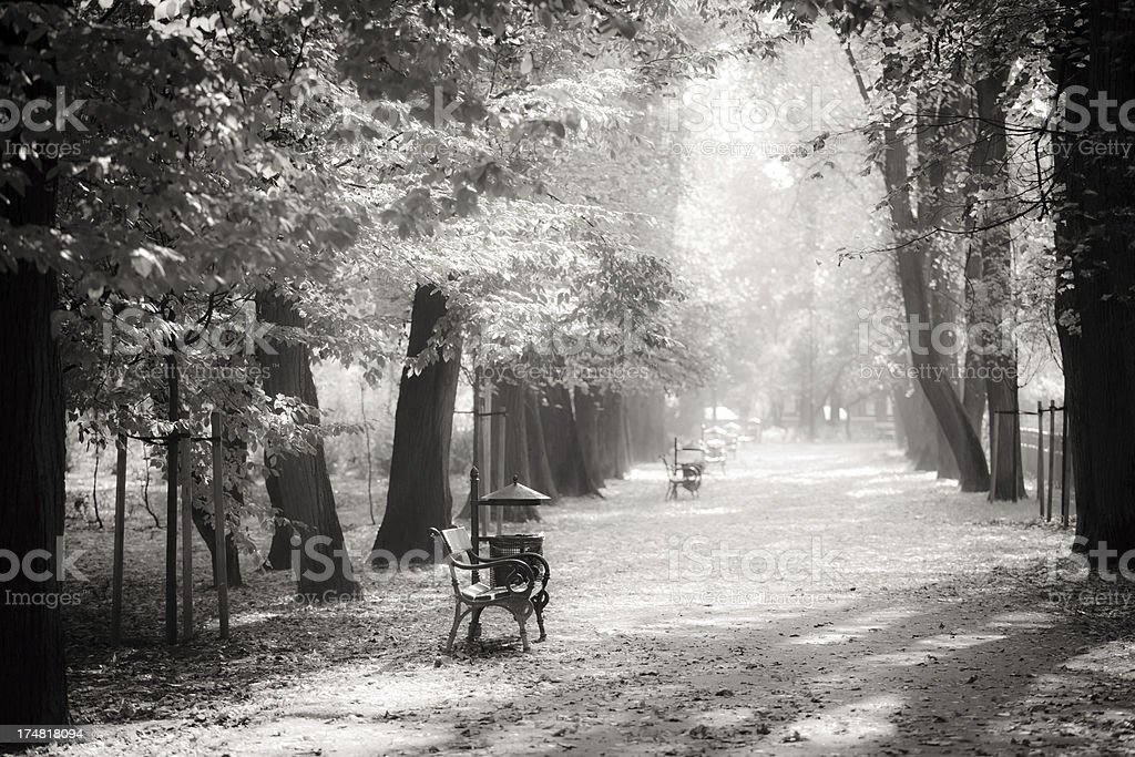 Bench in The Park and Defocused Background - B&W royalty-free stock photo