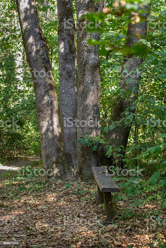 Bench in the park in a comfortable place stock photo