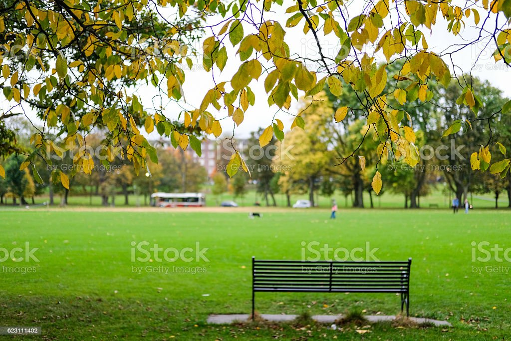 Bench in the park. stock photo