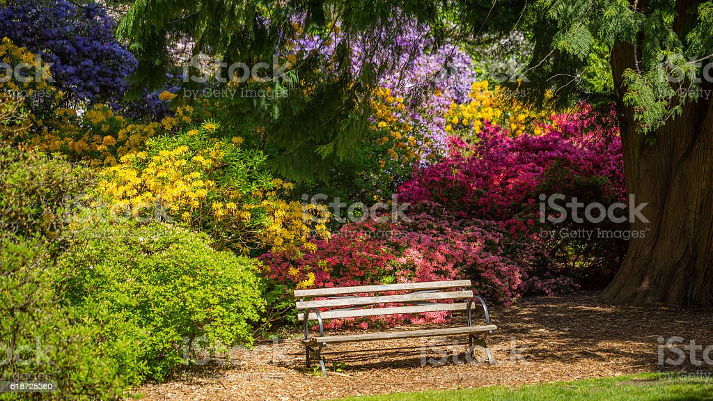 Bench in the park. Spring. Blooming trees stock photo
