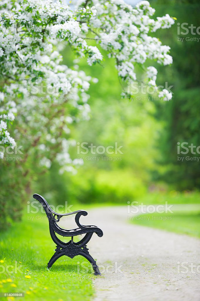 Bench in the spring garden stock photo
