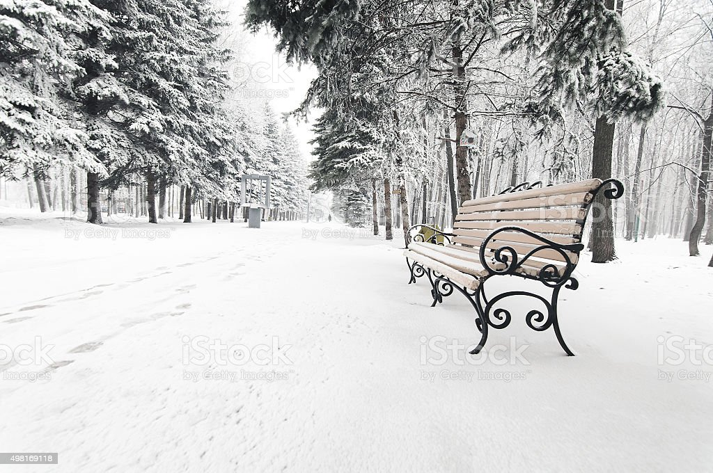bench in the winter park stock photo