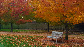 Bench Invites You to Relax on a Crisp Fall Day