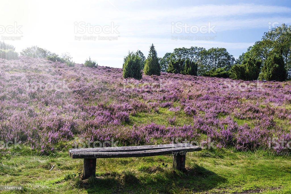 bench Lueneburg Heath stock photo