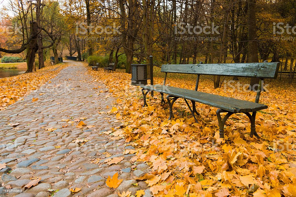 Bench on path in park stock photo