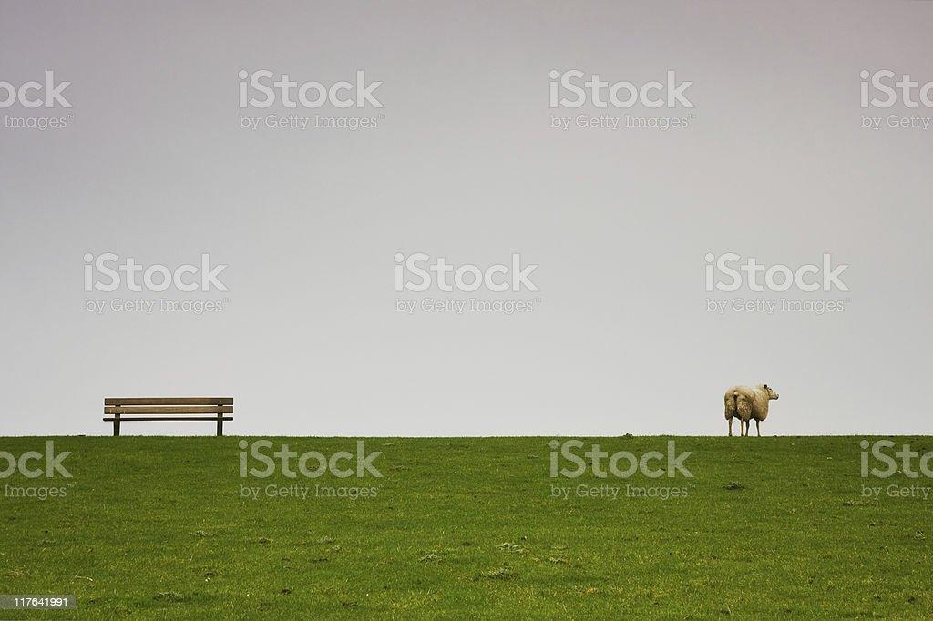 Bench Sheep royalty-free stock photo