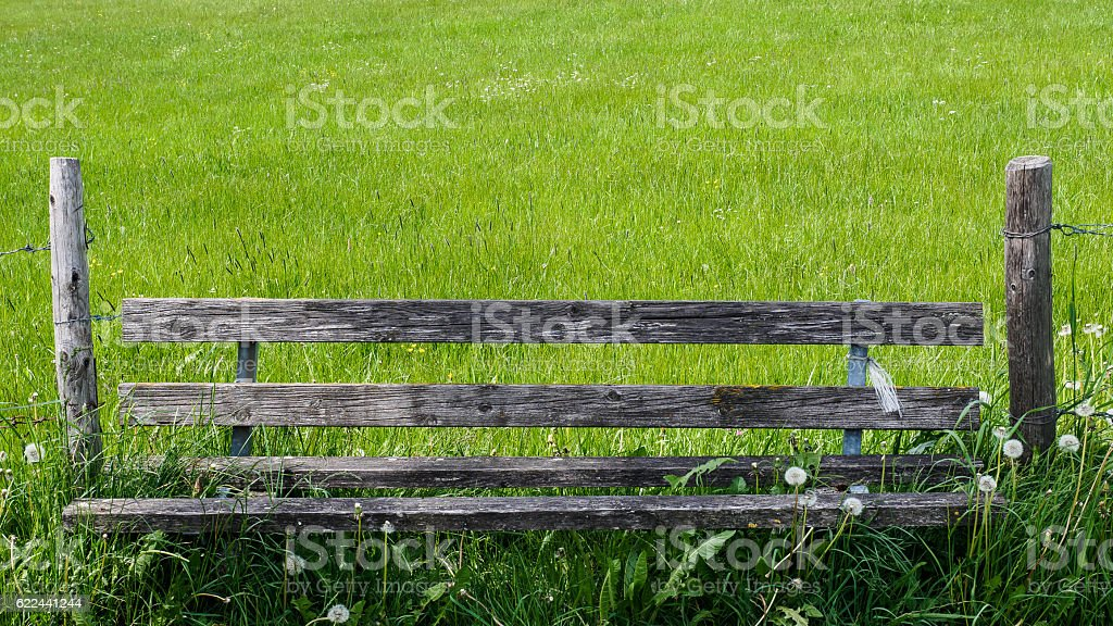 Bench with blowballs stock photo