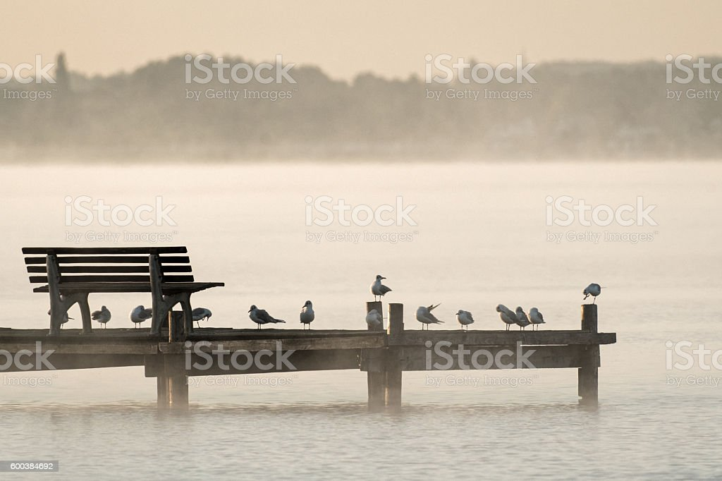 Bench with seagulls on jetty at lake in morning fog stock photo