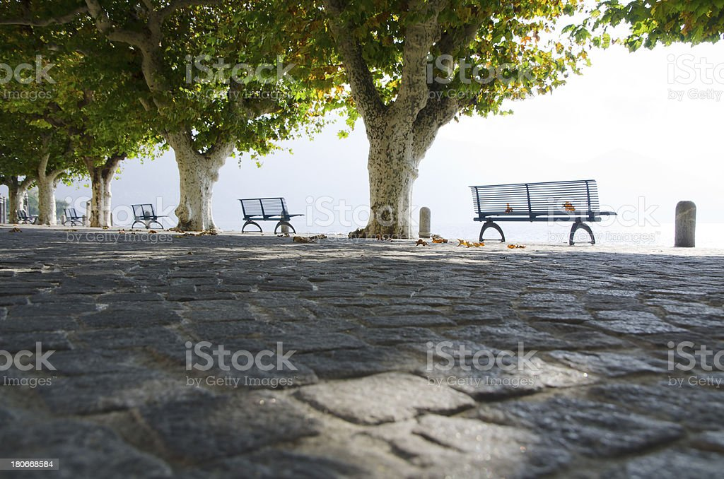 Benches and a trees royalty-free stock photo
