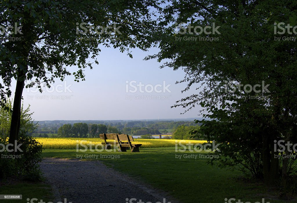 Benches And Rapeseed stock photo