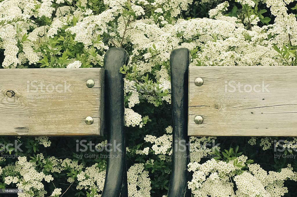 Benches in blossom royalty-free stock photo