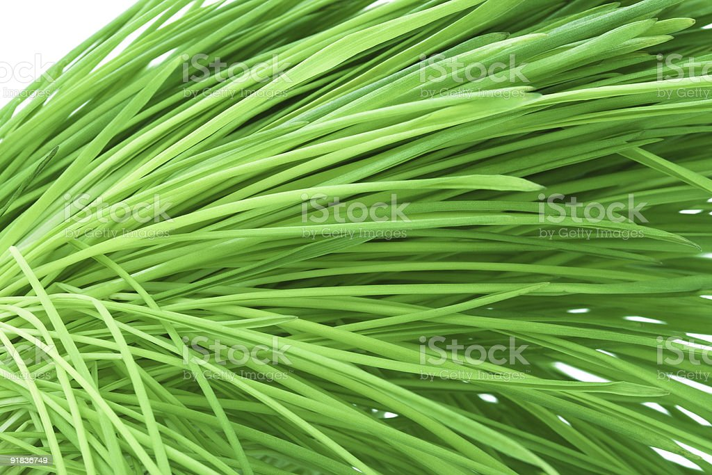 Bended green grass abstract natural background stock photo