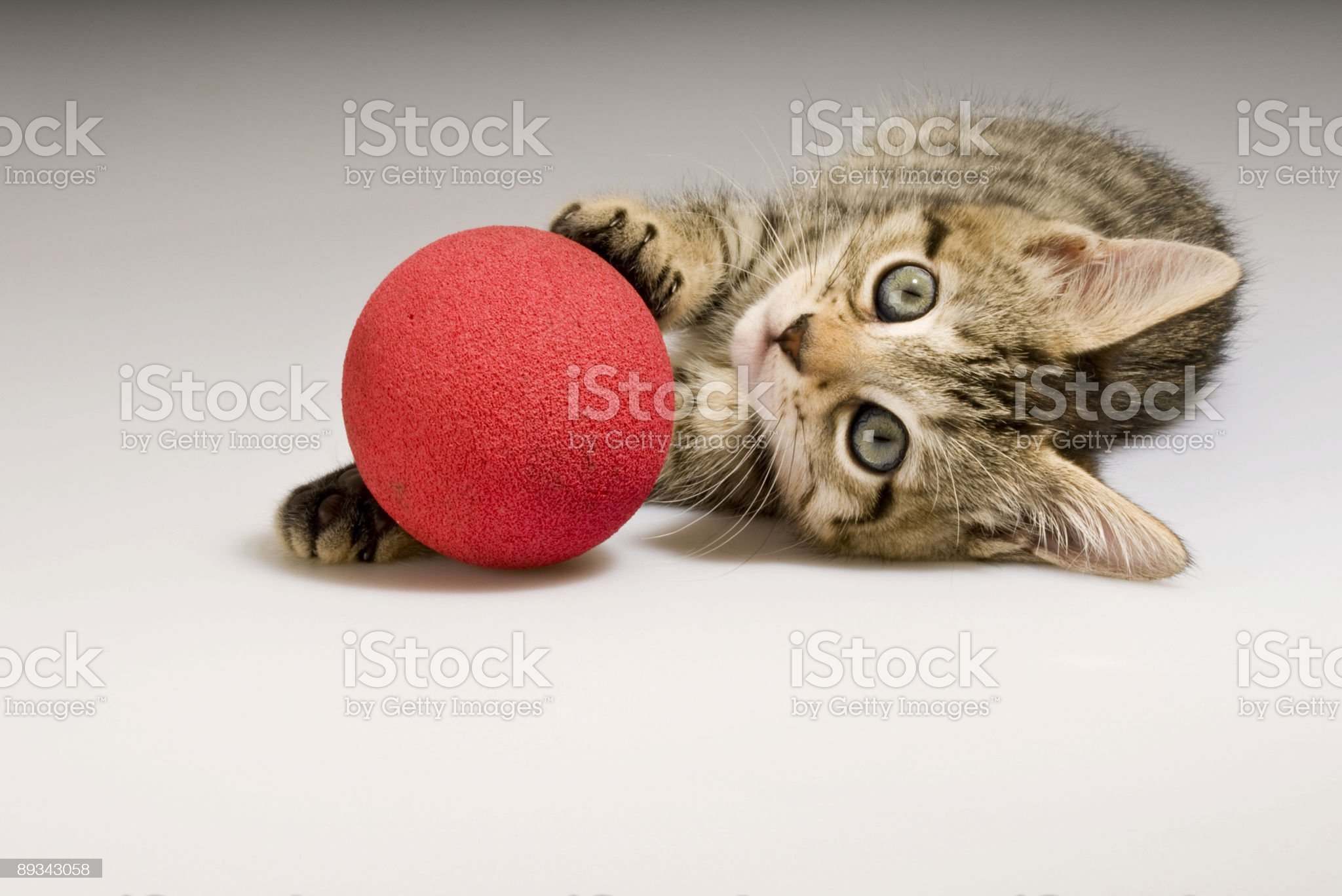 Bengal Kitten with Red Ball royalty-free stock photo