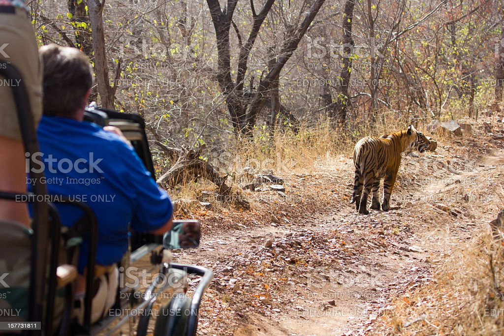 Bengal Tiger in Ranthambhore NP, India stock photo