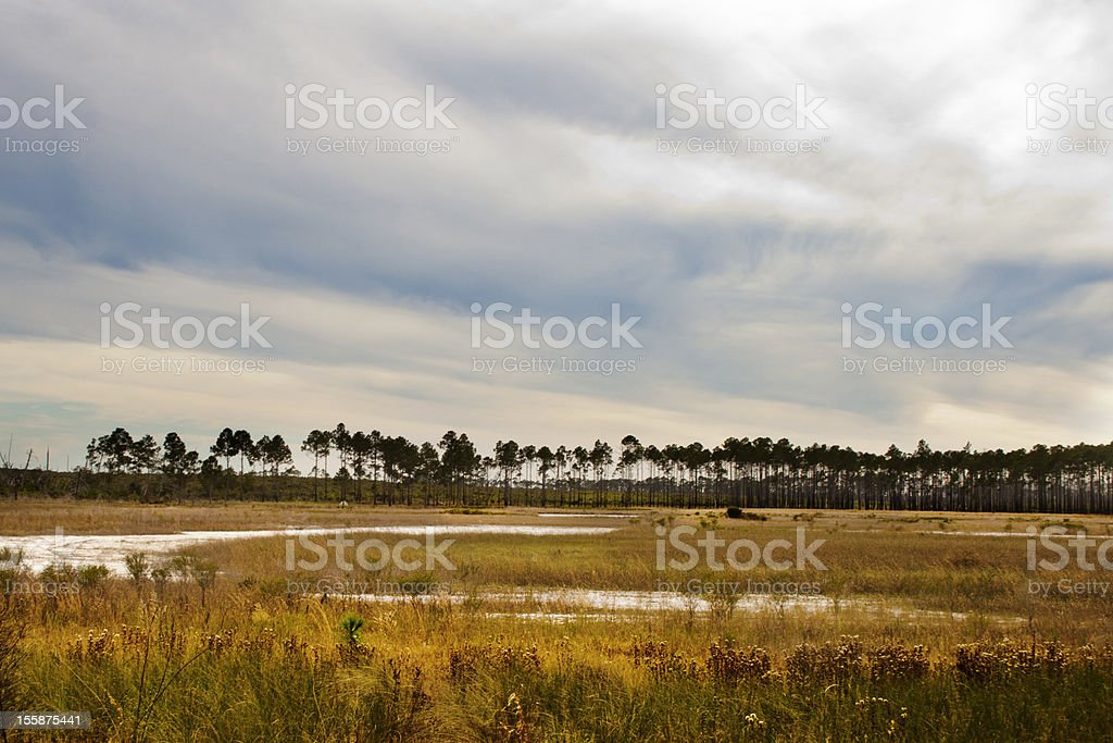 Bent Willow Branch stock photo