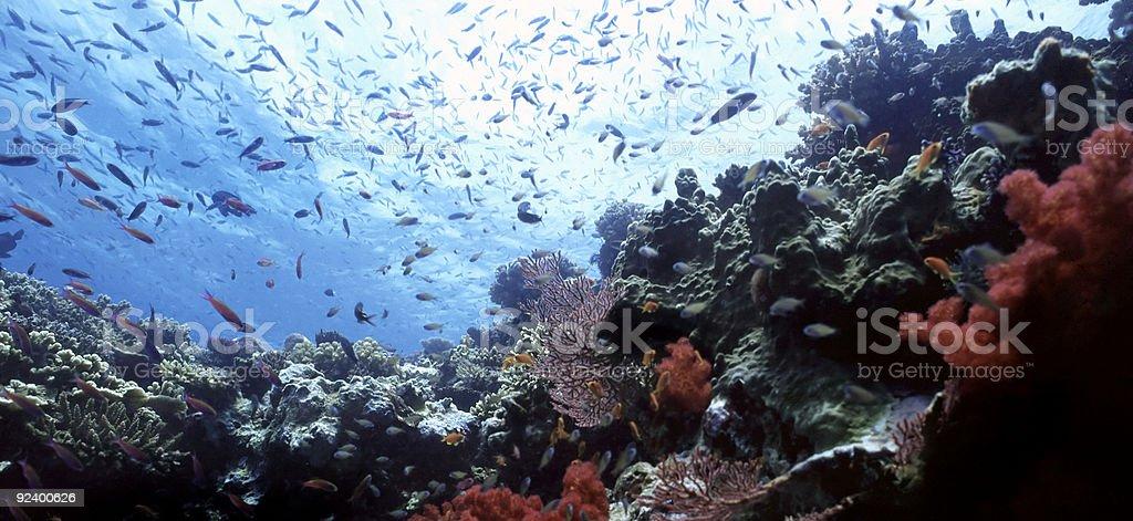 Bega récifs peu photo libre de droits