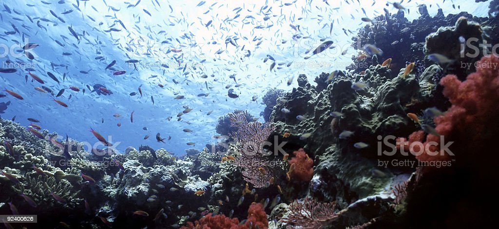 Beqa Shallow reef stock photo
