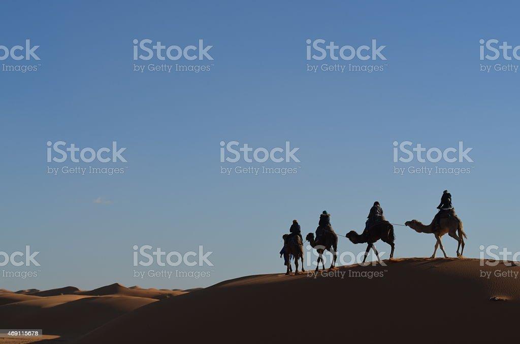 Berber camels stock photo