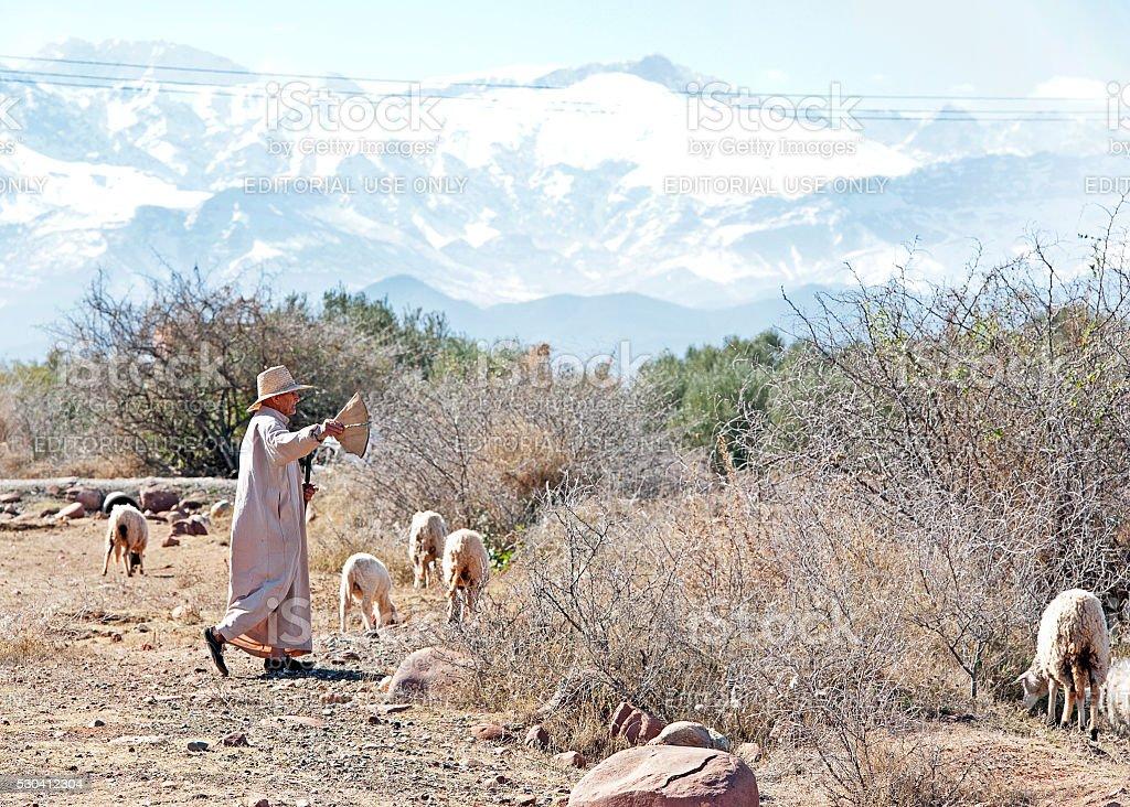 Berber sheep herder, Atlas Mountains, Marrakech, Morocco stock photo