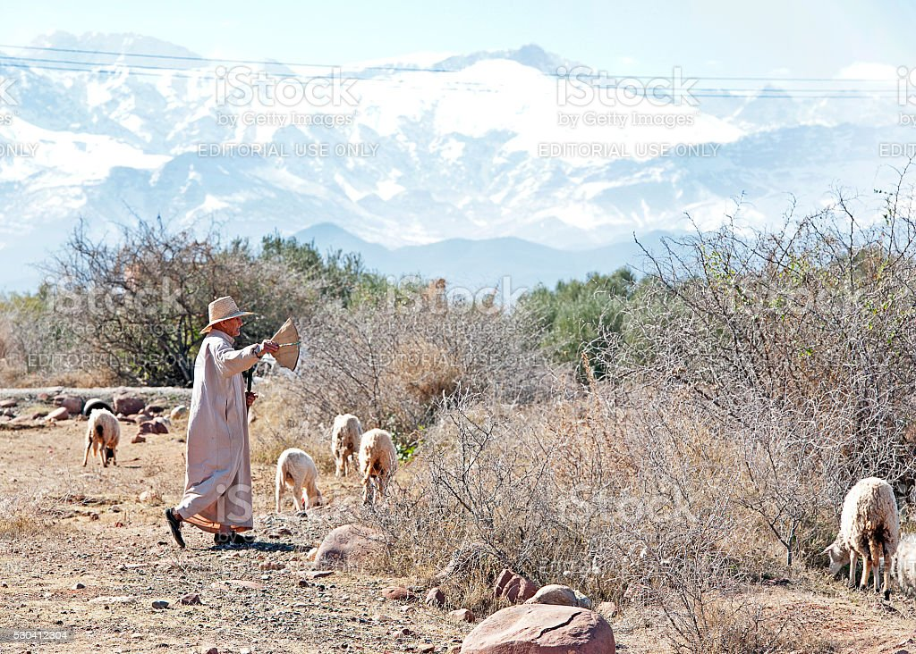 Berber sheep herder, Atlas Mountains, Marrakech, Morocco stock photo