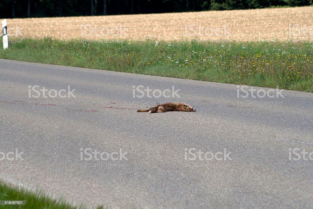 Überfahrener Fuchs auf der Straße stock photo