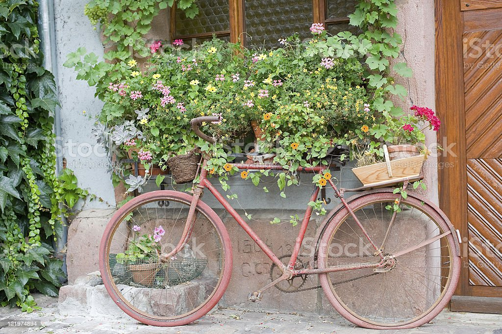 Bergheim (Alsace, France) - Pink bicycle and flowers royalty-free stock photo