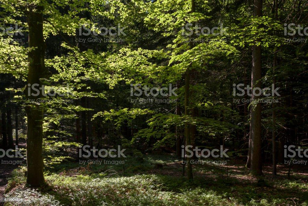 Bergwald stock photo