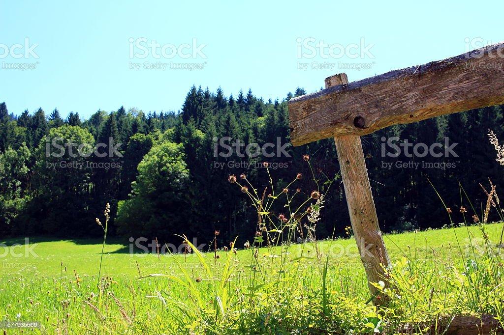 Bergwiese stock photo