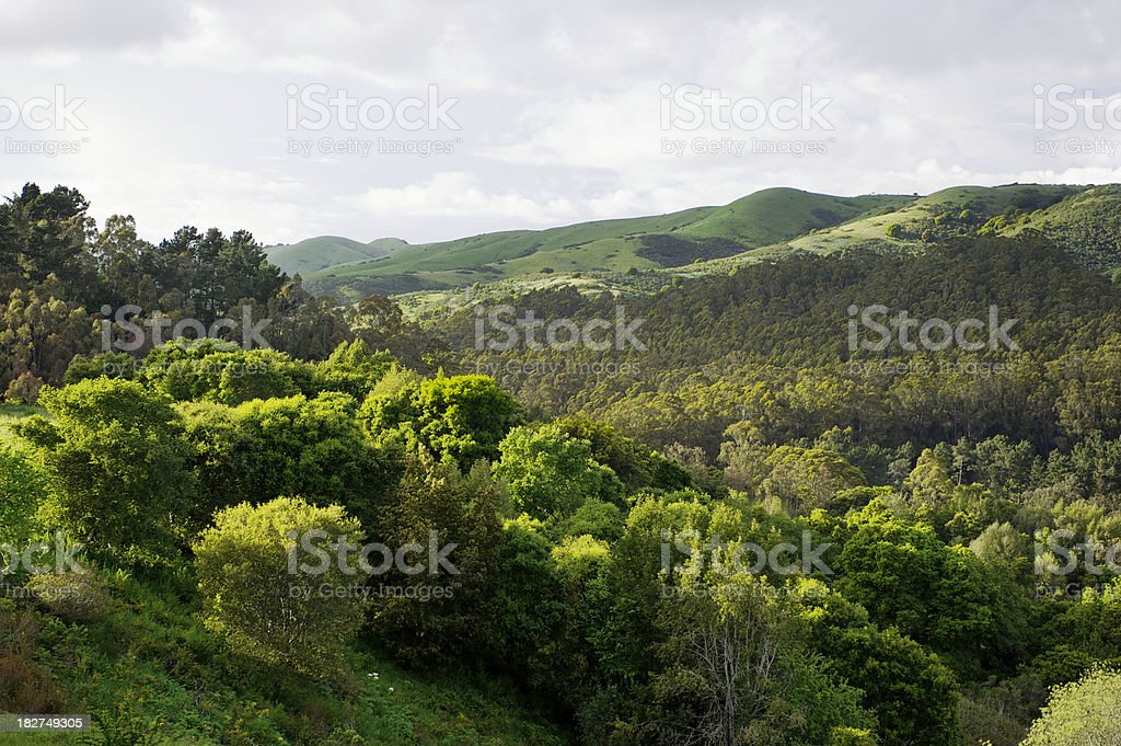Berkeley Hills - San Francisco Bay Area, Calfornia stock photo