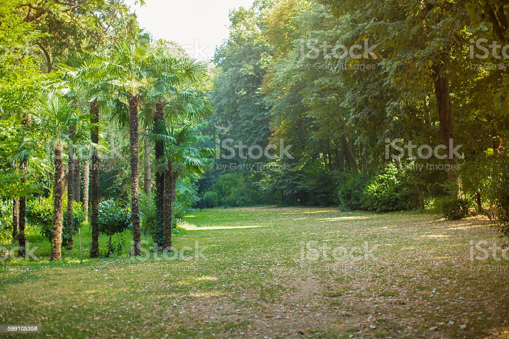 berlin, tiergarten park stock photo