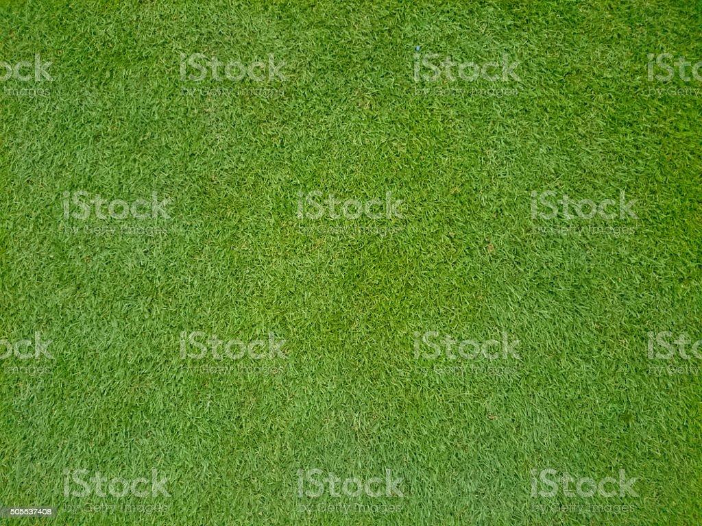 Bermuda Grass stock photo