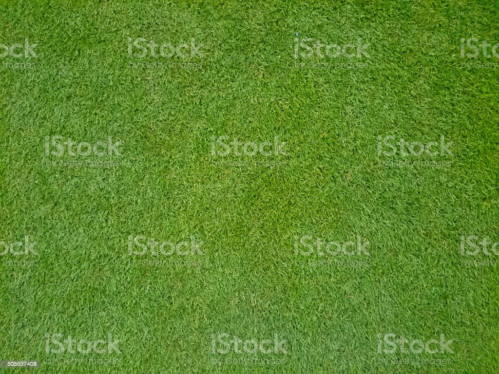 Bermuda Grass stock photo