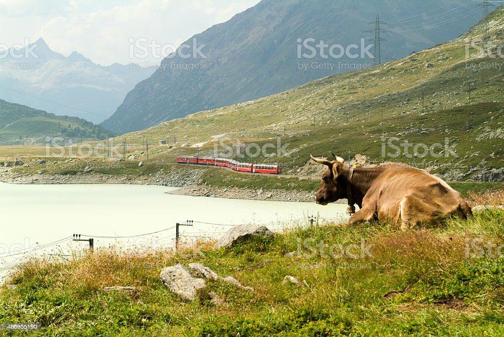 Bernina express train at the lake of Ospizio Bernina stock photo