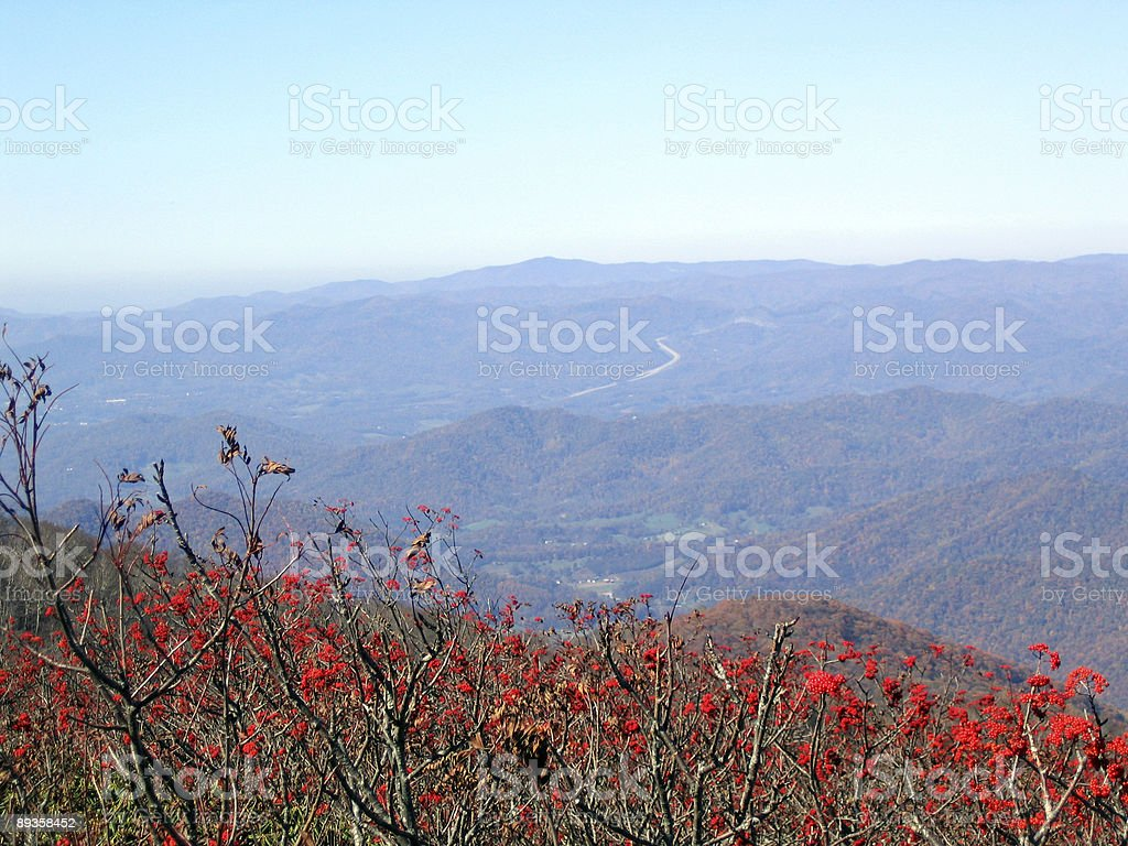 berries against the moutnains royalty-free stock photo