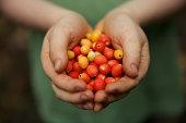 Berries child hands Australia