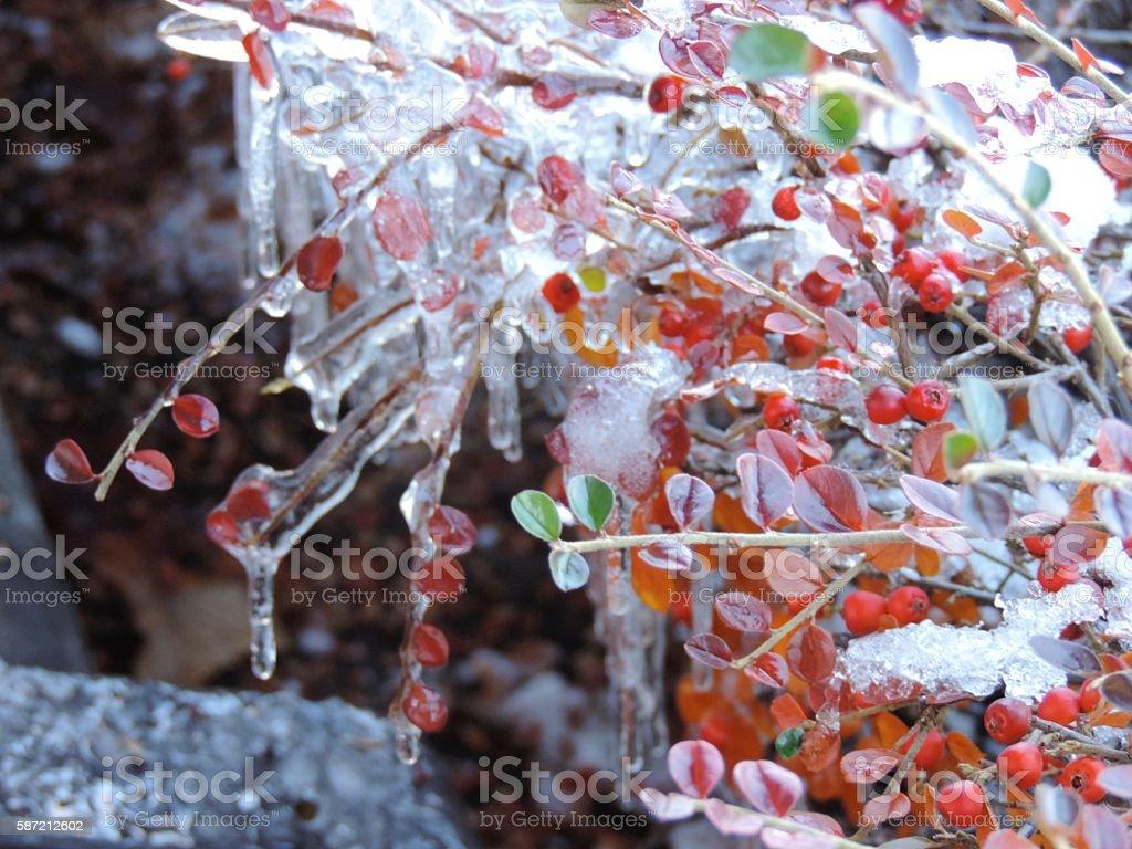 Berries in Ice stock photo
