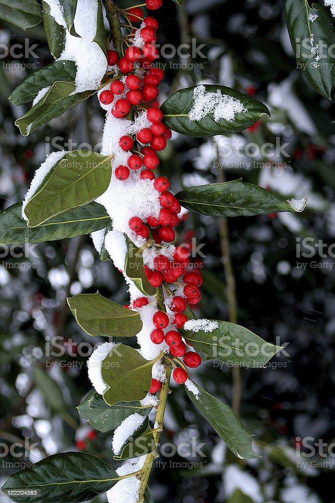 Berries in Snow stock photo